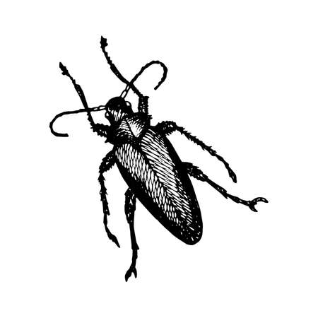 Longhorn Beetle Icon Painted a White Gel Pen on White Background