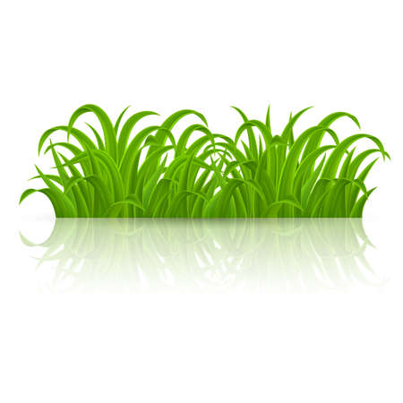 Fresh Spring Green Grass Elements for Nature Design. Illustration on White Background