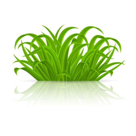 Green grass Elements for Spring or Nature Design. Illustration on White