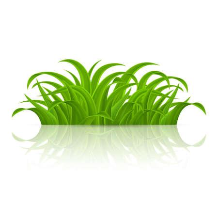 Green grass Elements for Spring or Nature Design. Illustration on White Background Vettoriali