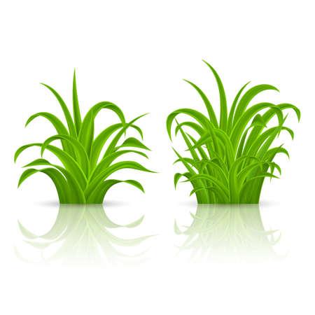 Fresh Green Grass Elements for Spring Design. Illustration on White Background