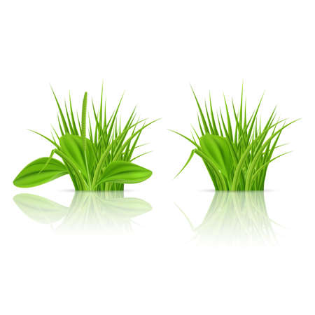Green grass Elements for Design and Decorate. Illustration on White Background Illustration