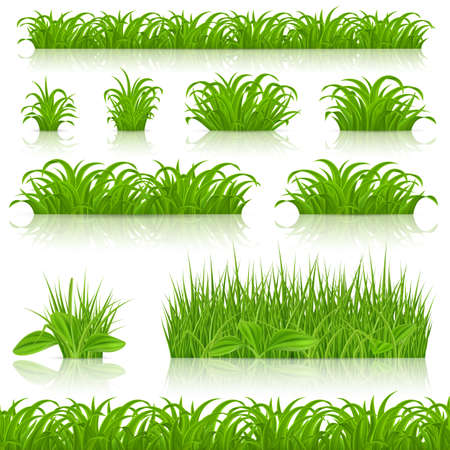 Big Grass Borders Set Isolated on White Background