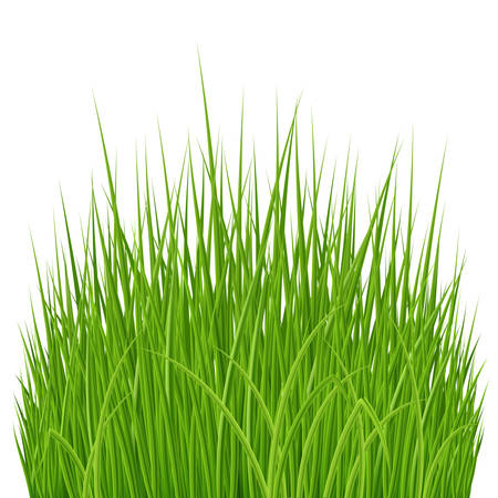 Fresh Spring Green Grass Elements for Nature Design Illustration on White Illustration