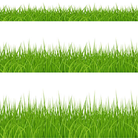 Set of Green Grass Elements on White Background
