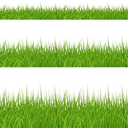 Ensemble d'éléments d'herbe verte sur fond blanc