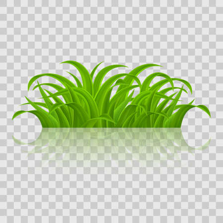 Fresh Green Grass design
