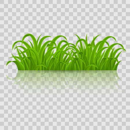Fresh Spring Green Grass Elements for Nature Design. Illustration on Transparent Background for Design