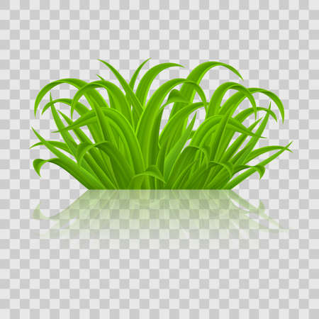 Green grass Elements for Spring or Nature Design. Illustration on Transparent Background