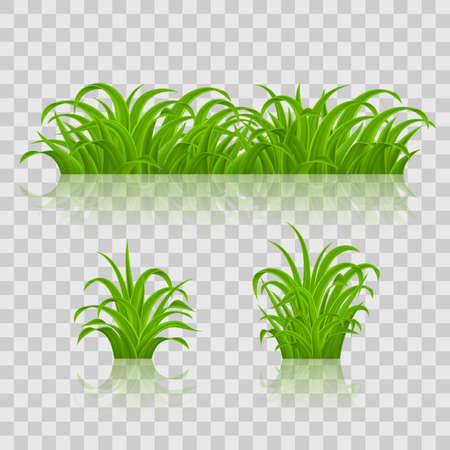 Set of Green Grass Vector illustration. Isolated on Transparent Background.