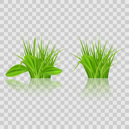 Green grass Elements for Design and Decorate. Illustration on Transparent Background