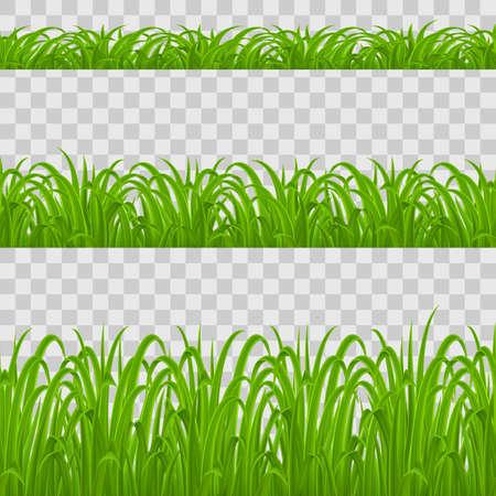 Set of Green Grass Elements on Transparent Background for Design Illustration