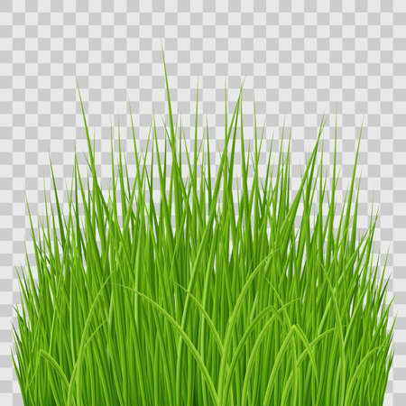 Fresh Spring Green Grass Elements for Nature Design on Transparent Background.