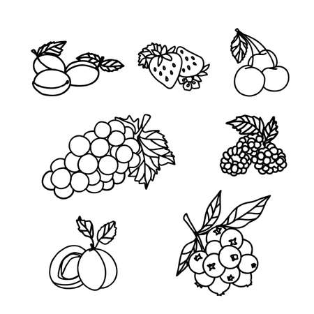 Fruit and Berry Sketch vector illustration