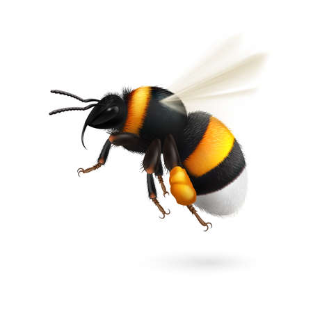 Illustration of Flying Bumblebee Illustration