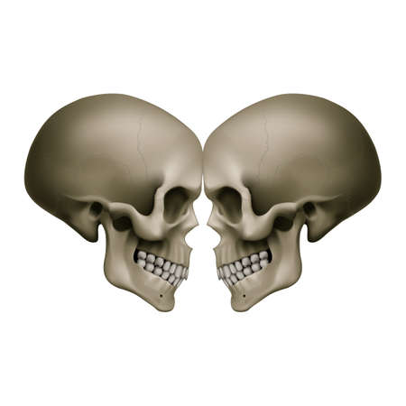 The Human Skulls with Mirror Effects. Illustration for Medicine, Science or for a Game Design on White Background
