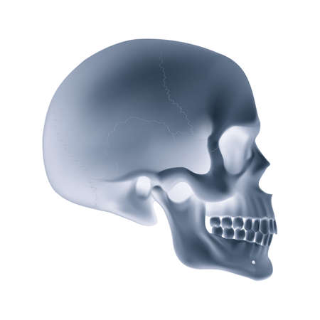 The Human Skull. Illustration for Medicine, Science or for a Game Design with Xray effects
