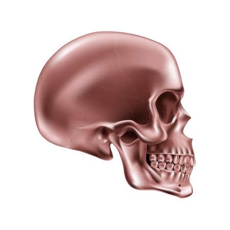 Copper Human Skull on White Background for Design