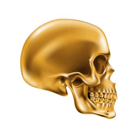 Golden Human Skull on White Background for Design