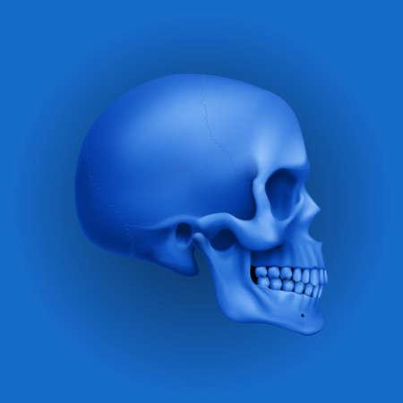 The Blue Human Skull. Illustration for Medicine, Science or for a Game Design on Blue Background