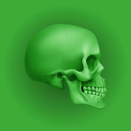 The Green Human Skull. Illustration for Medicine, Science or for a Game Design on Green Background