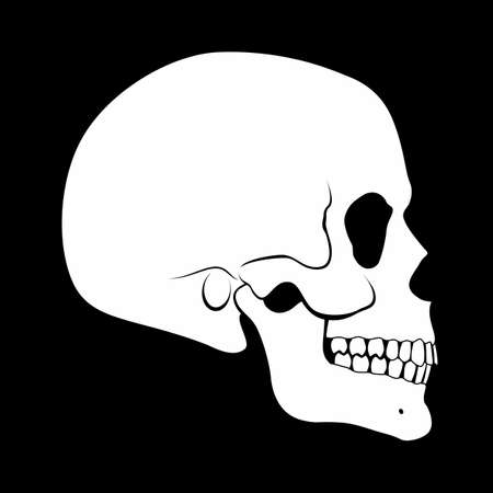 Illustration of White Human Skull Side View Simple Silhouette on Black Background
