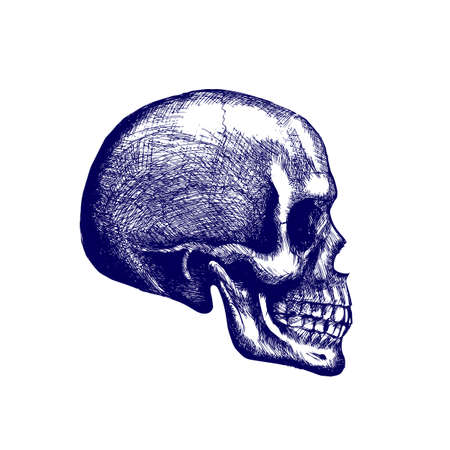 Skull of a Human in Profile. Hand Drawing Anatomy Skull with Different Tones and Lines  イラスト・ベクター素材