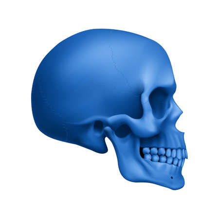 The Blue Human Skull. Illustration for Medicine, Science or for a Game Design on White Background