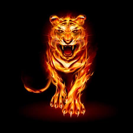 Ilustración de Big Fire Tiger caminando y rugiendo sobre fondo negro para el diseño