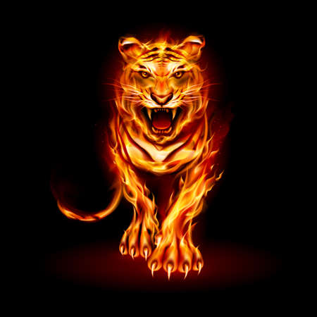 Illustration of Big Fire Tiger Walking and Roaring on Black Background for Design