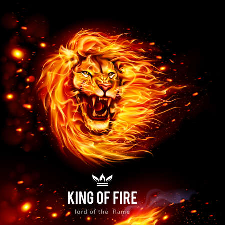 Head of Aggressive Lion in Flames. King of Fire. Illustration on Black Background
