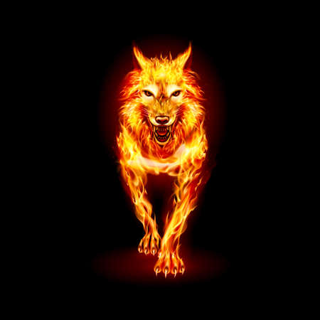 Aggressive Fire Woolf. Concept Image of a Red Wolf and Flame on a Black Vektoros illusztráció