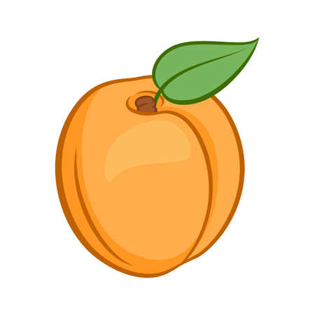 Illustration of Juicy Stylized Apricot Fruit with Leaf. Icon for Food Apps Isolated on a White Background