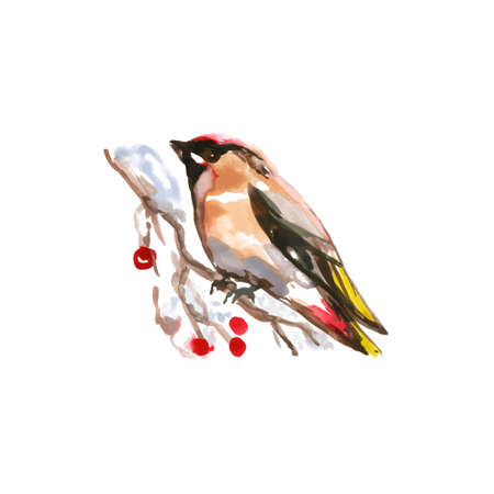 Watercolor Bird European Goldfinch, Latin name - Carduelis Carduelis, Perched on a Branch. Hand Drawn Illustration on White Backdrop