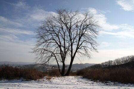 Lonely tree in a winter wood. Stock Photo - 3427269