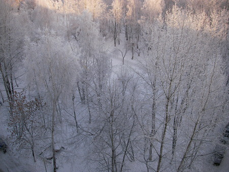 froze: The easy frost silvered trees in city park and froze bright brushes of mountain ashes