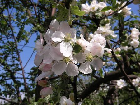 melba: Si la persona necesita para vivir un solo d�a - es necesario para plantar un �rbol de manzanas
