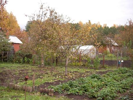 melba: Si la persona necesita para vivir un solo día - es necesario para plantar un árbol de manzanas