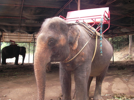appendage: The largest animal on the earth an elephant is found in Asia and in Africa and gets divorced on farms the person