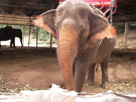boor: The largest animal on the earth an elephant is found in Asia and in Africa and gets divorced on farms the person