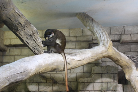 Monkeys are similar to us and very often copy our behavior showing reason