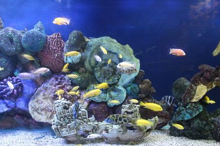 Sea inhabitants before eyes of visitors in an oceanarium Stock Photo