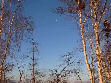 remained: The moon as if was hooked for tops of trees and remained to stay for a while in the afternoon Stock Photo