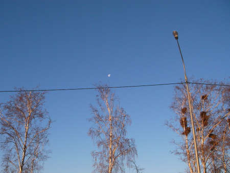 hooked: The moon as if was hooked for tops of trees and remained to stay for a while in the afternoon Stock Photo