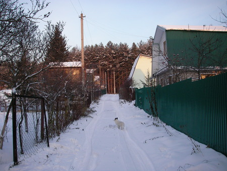dacha: Late fall at dacha the first fluffy snow dropped out