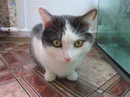 astonishment: Ojos redondos de un gato con asombro mira al fot�grafo