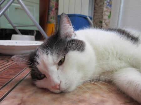 asombro: Ojos redondos de un gato con asombro mira al fot�grafo