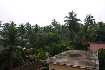 among: the small guest house among palm trees in India Stock Photo