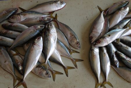 sea fans: fresh-caught fish is delivered to the market, for sale to buyers, fans of seafood Stock Photo