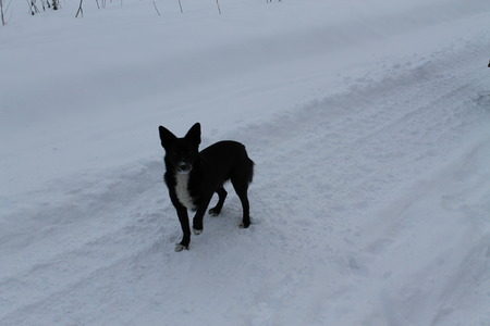 doggie: small black not purebred doggie on white snow